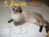 Oussama12 - éleveur Shinycatz