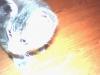 didine10270 - éleveur Shinycatz