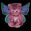 cynder1 - éleveur Shinycatz