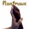 Planimaux - éleveur Shinycatz