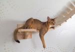 Un Abyssin suspendu dans un hamac pour chat