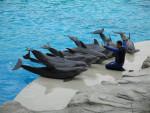 Dolphin - Dauphin (4 ans)