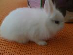 Lili ma petite lapine - Lapin (1 mois)