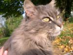 Chat Groseille -  Femelle (14 ans)