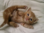 Garfield - Mâle (2 mois)