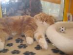 Show Cat 2 - (Autre)