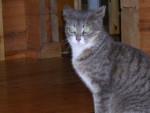 Chat cracotte -  Femelle (5 ans)