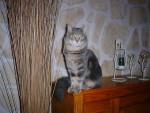 Chat mon chat gipsy -   (Vient de naître)