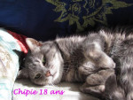 Chat Chipie  -   (0 mois)