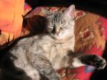 Chat Mimi fait bronzette -   (0 mois)