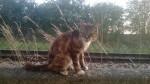 Chat Minette -  Femelle (Autre)