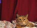 Rockey-lyn - (8 ans)