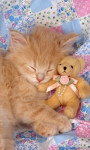 Chat Kitten -   (Vient de naître)