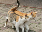 Chat deux chat qui s`aime -   (3 ans)