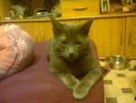 Chat Fripouille -  Mâle (3 ans)