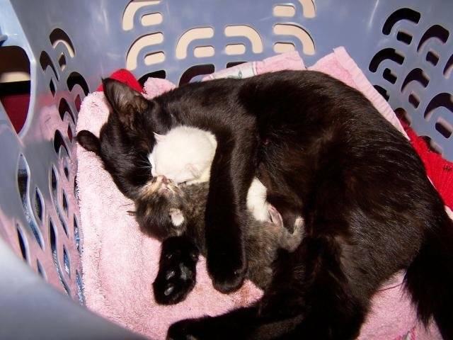 chat de gouttière Mimine -
